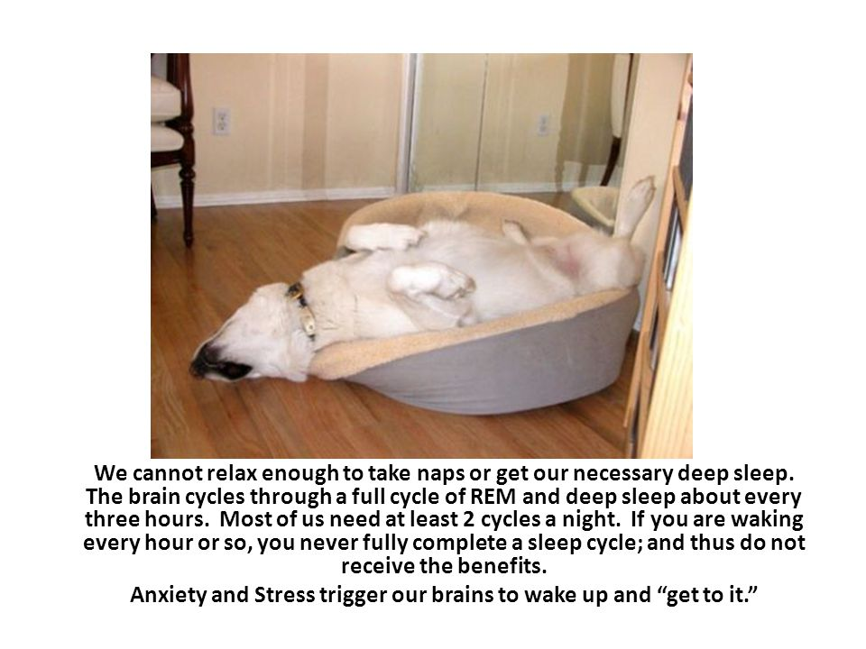 A person can find themselves in a terrible cycle of waking fully alert usually between 2-3 am when they need to be deeply sleeping; and, then just an hour or two before the alarm goes off, they crash into sleep, and find waking up very difficult - and the alarm clock no friend.