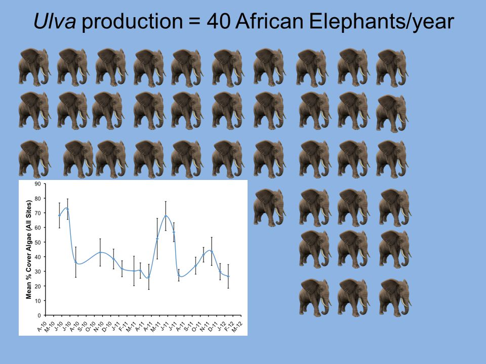 Ulva production = 40 African Elephants/year