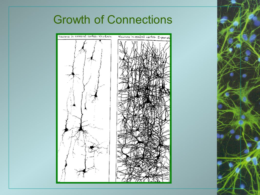 Growth of Connections