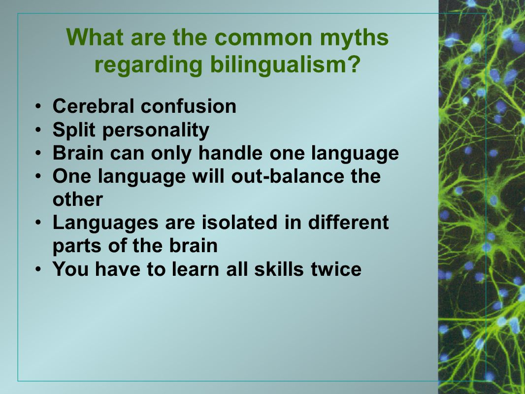 What are the common myths regarding bilingualism? Cerebral confusion Split personality Brain can only handle one language One language will out-balanc