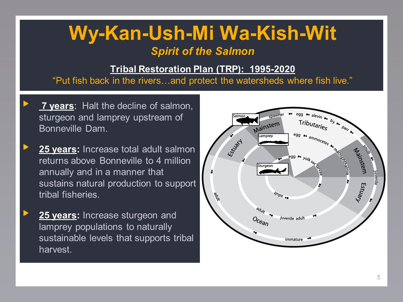 5 Wy-Kan-Ush-Mi Wa-Kish-Wit Spirit of the Salmon Tribal Restoration Plan (TRP): 1995-2020 Put fish back in the rivers…and protect the watersheds where fish live. 7 years: Halt the decline of salmon, sturgeon and lamprey upstream of Bonneville Dam.