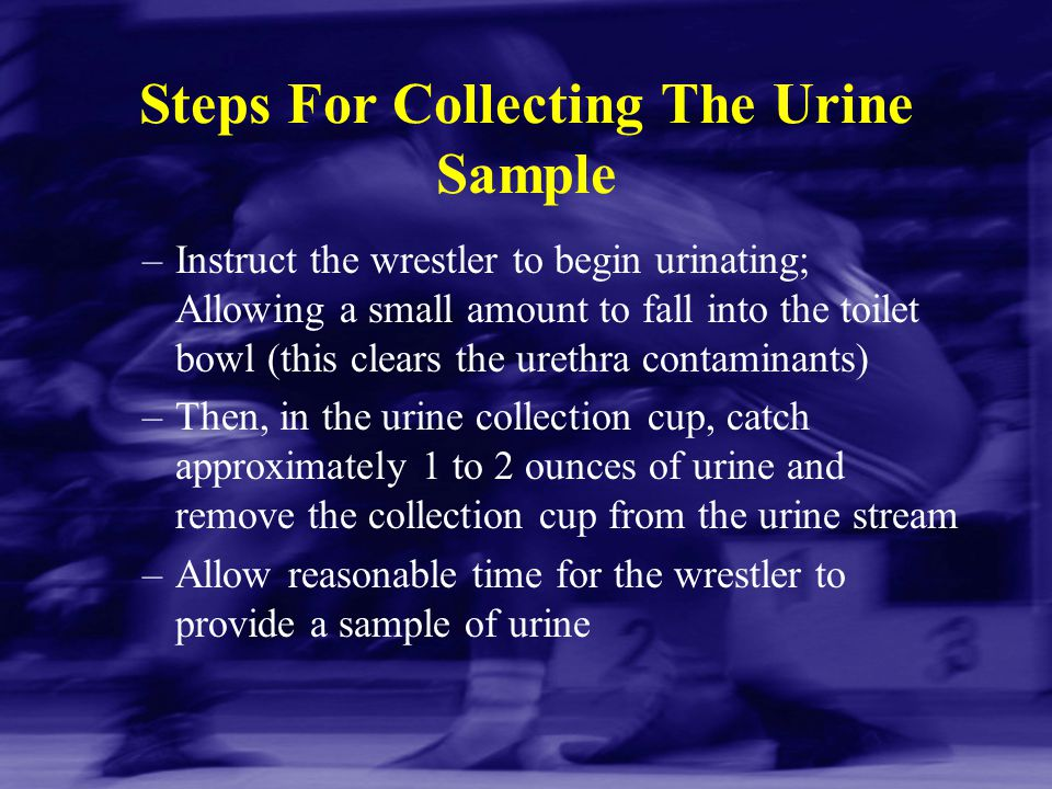 Steps For Collecting The Urine Sample –Instruct the wrestler to begin urinating; Allowing a small amount to fall into the toilet bowl (this clears the