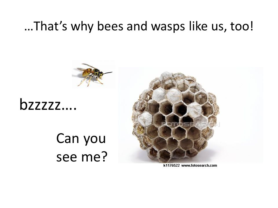 …That's why bees and wasps like us, too! bzzzzz…. Can you see me?