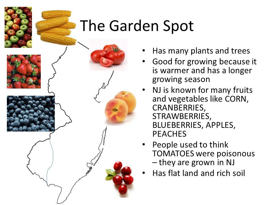 The Garden Spot Has many plants and trees Good for growing because it is warmer and has a longer growing season NJ is known for many fruits and vegeta