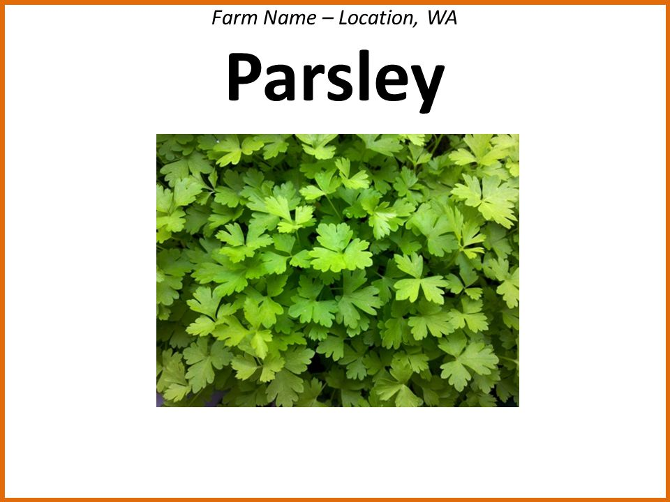 Farm Name – Location, WA Parsley