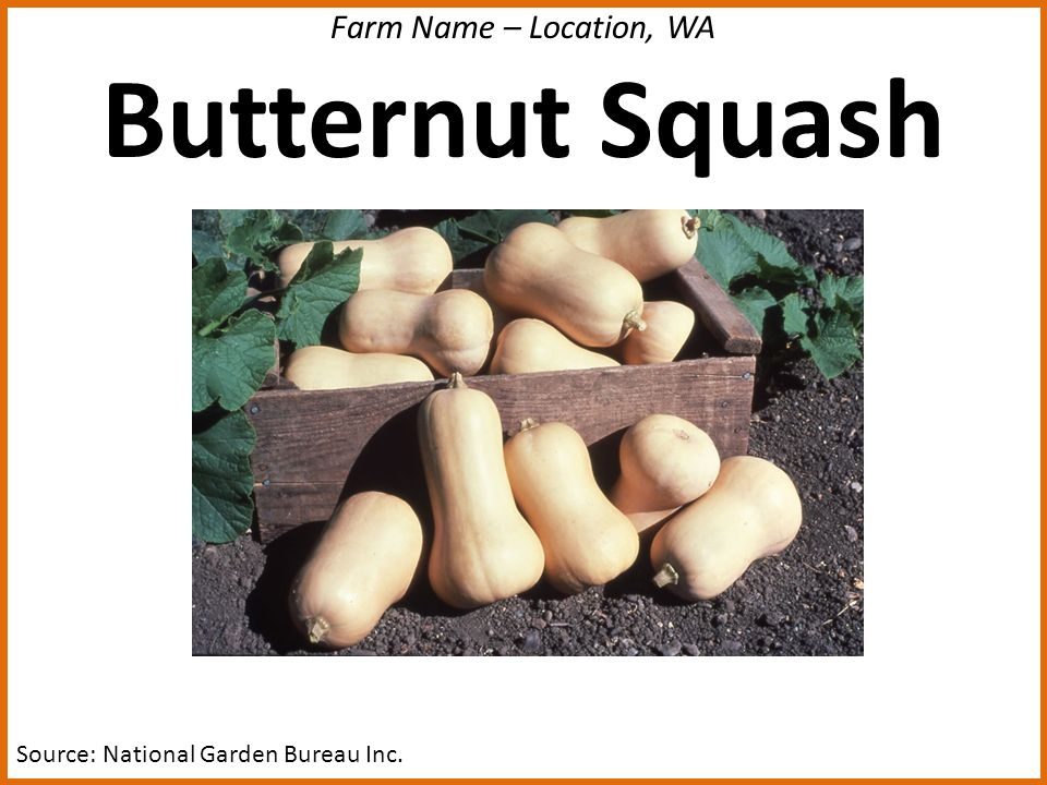 Farm Name – Location, WA Butternut Squash Source: National Garden Bureau Inc.