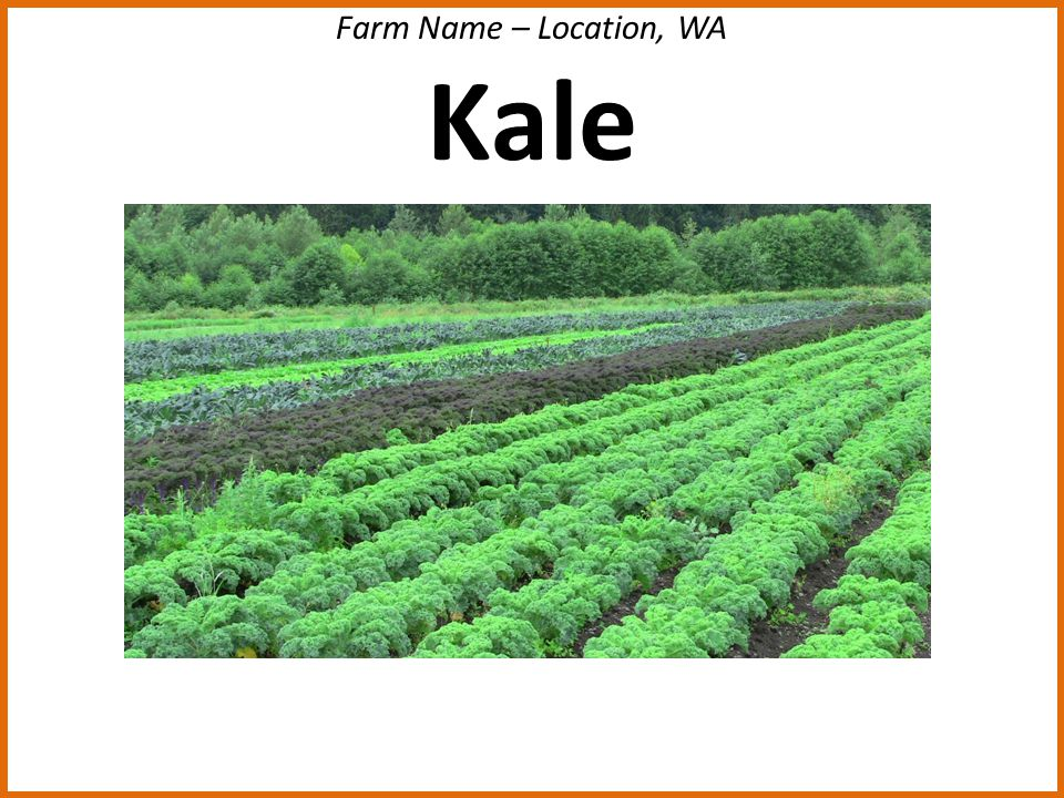Farm Name – Location, WA Kale