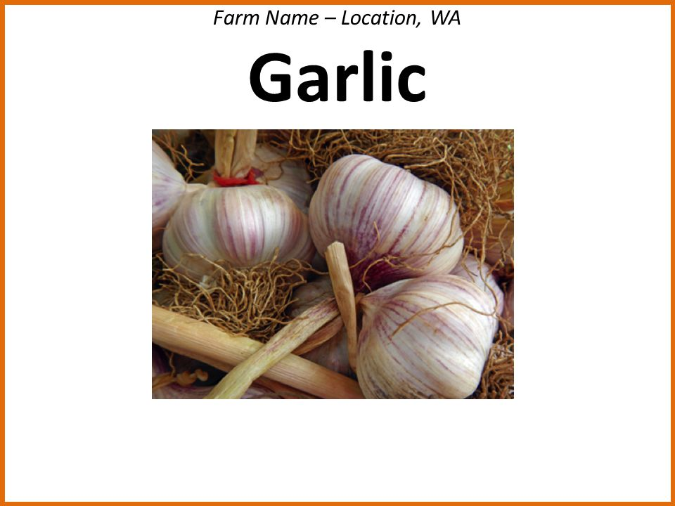 Farm Name – Location, WA Garlic