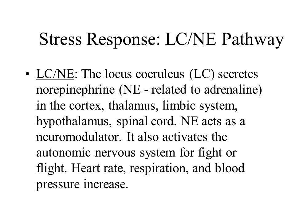Stress Response: LC/NE Pathway LC/NE: The locus coeruleus (LC) secretes norepinephrine (NE - related to adrenaline) in the cortex, thalamus, limbic sy
