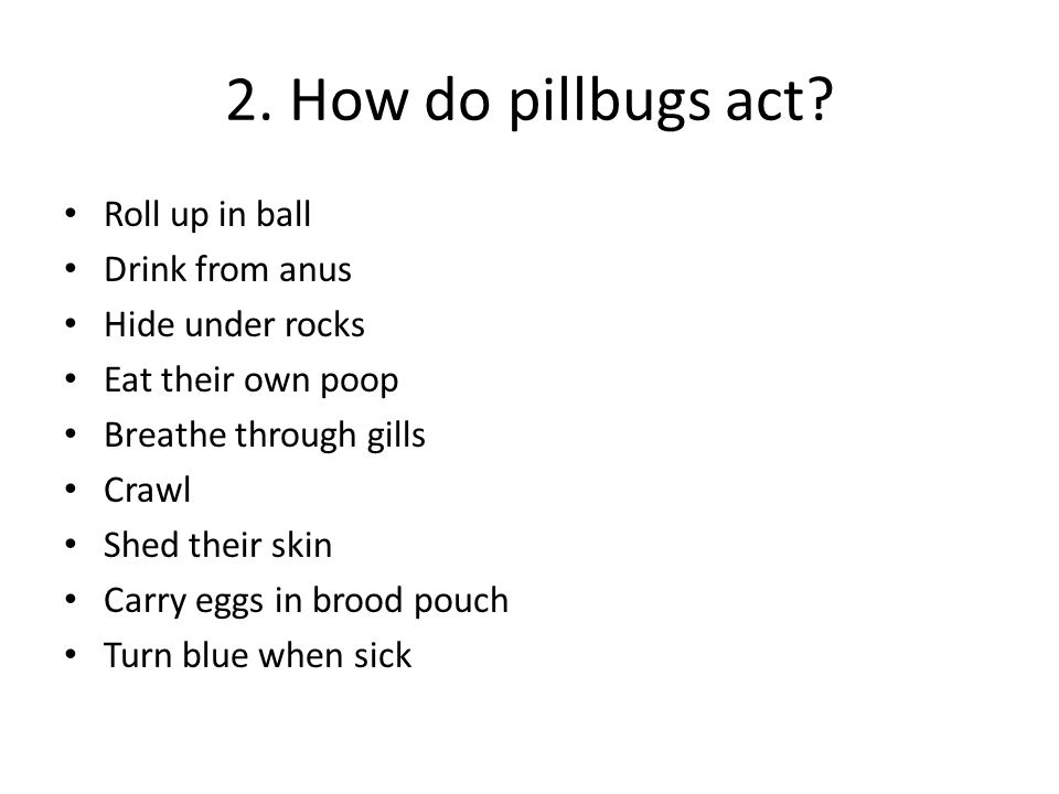 2. How do pillbugs act? Roll up in ball Drink from anus Hide under rocks Eat their own poop Breathe through gills Crawl Shed their skin Carry eggs in