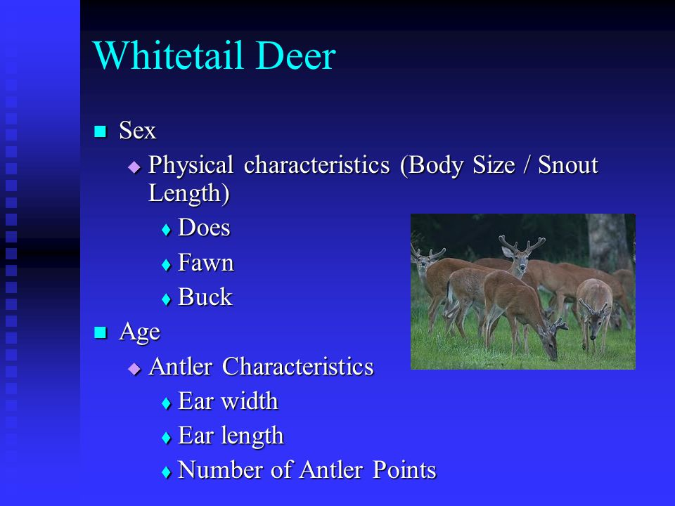 Whitetail Deer Sex Sex  Physical characteristics (Body Size / Snout Length)  Does  Fawn  Buck Age Age  Antler Characteristics  Ear width  Ear length  Number of Antler Points