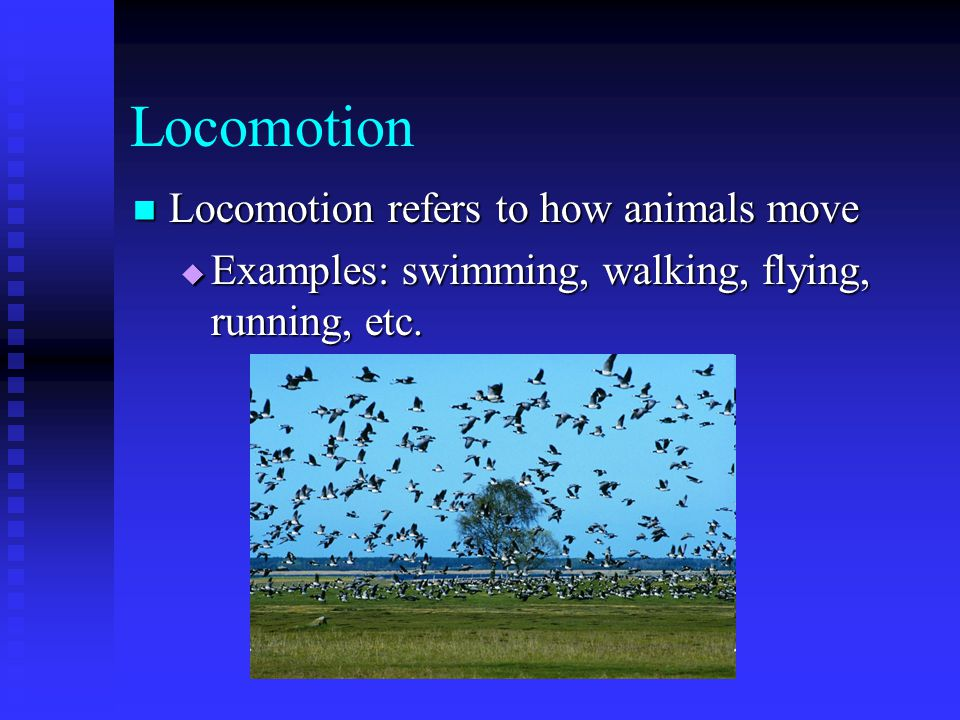 Locomotion Locomotion refers to how animals move Locomotion refers to how animals move  Examples: swimming, walking, flying, running, etc.