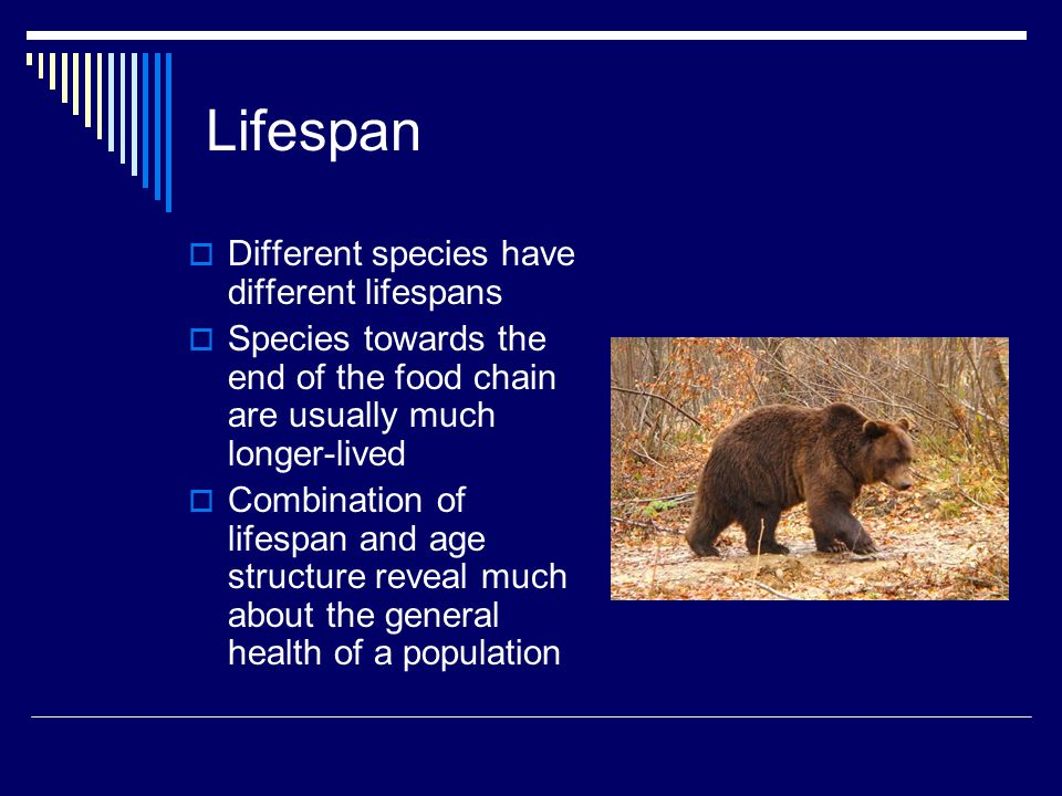Lifespan  Different species have different lifespans  Species towards the end of the food chain are usually much longer-lived  Combination of lifes