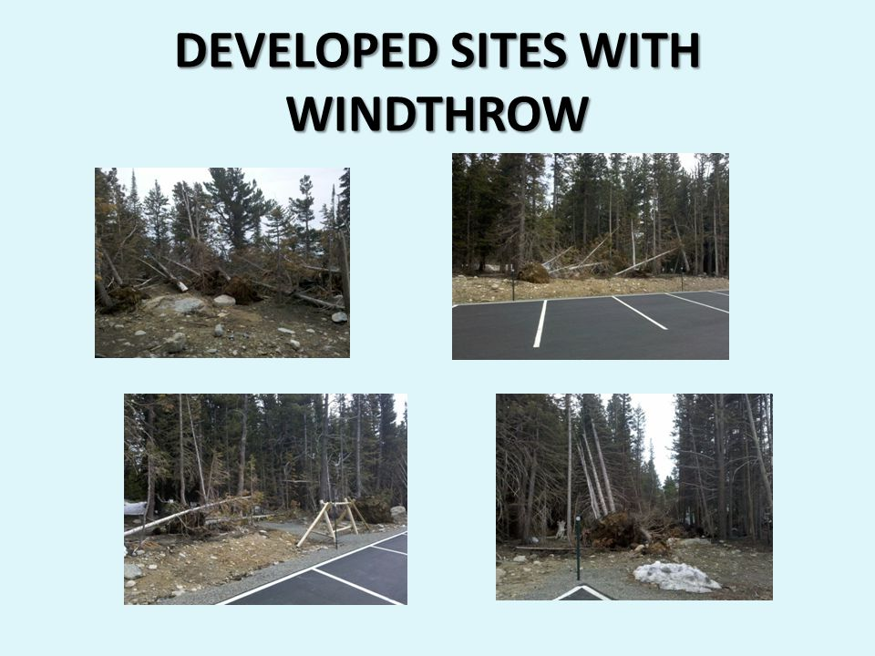 DEVELOPED SITES WITH WINDTHROW
