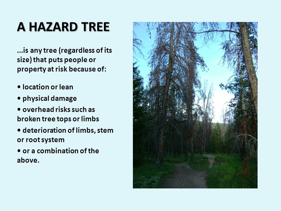 A HAZARD TREE...is any tree (regardless of its size) that puts people or property at risk because of: location or lean physical damage overhead risks such as broken tree tops or limbs deterioration of limbs, stem or root system or a combination of the above.