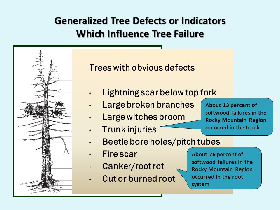 Generalized Tree Defects or Indicators Which Influence Tree Failure Trees with obvious defects Lightning scar below top fork Large broken branches Large witches broom Trunk injuries Beetle bore holes/pitch tubes Fire scar Canker/root rot Cut or burned root About 76 percent of softwood failures in the Rocky Mountain Region occurred in the root system About 13 percent of softwood failures in the Rocky Mountain Region occurred in the trunk