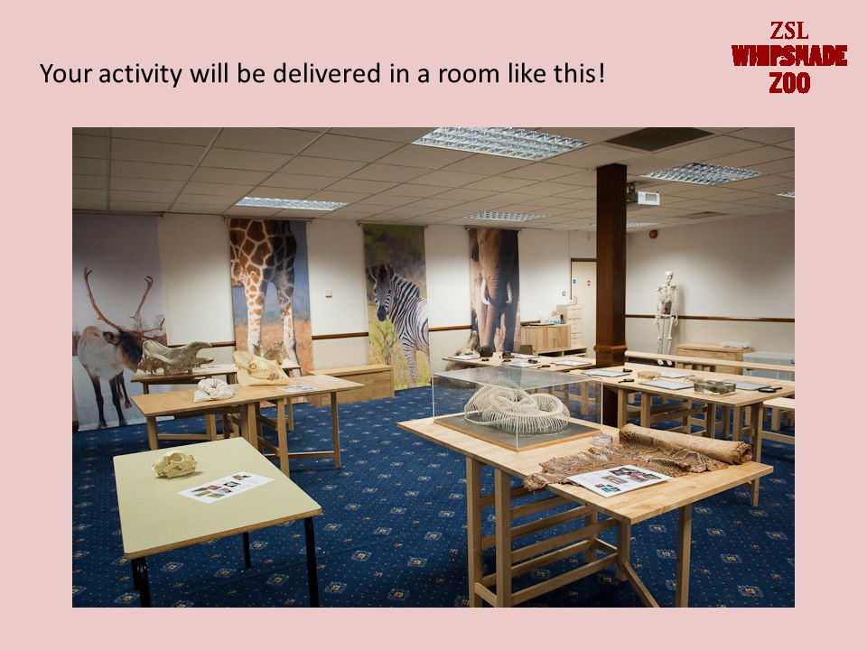 Your activity will be delivered in a room like this!
