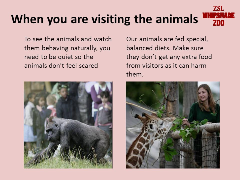 When you are visiting the animals Our animals are fed special, balanced diets.