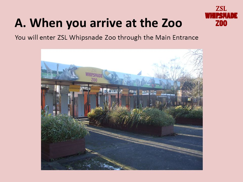 A. When you arrive at the Zoo You will enter ZSL Whipsnade Zoo through the Main Entrance