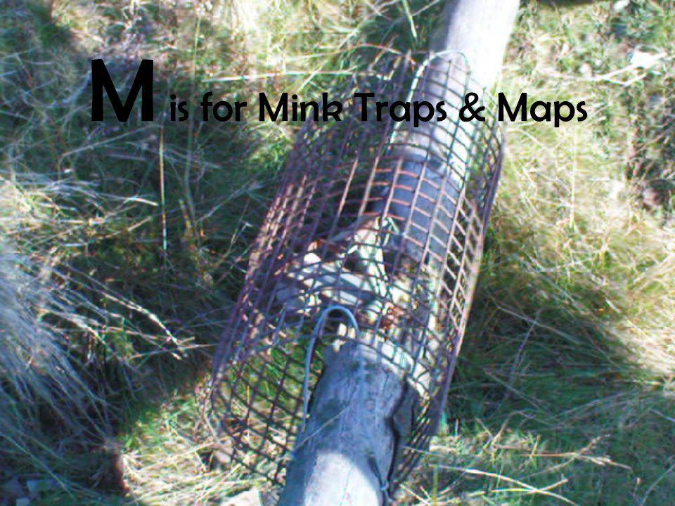 M is for Mink Traps & Maps