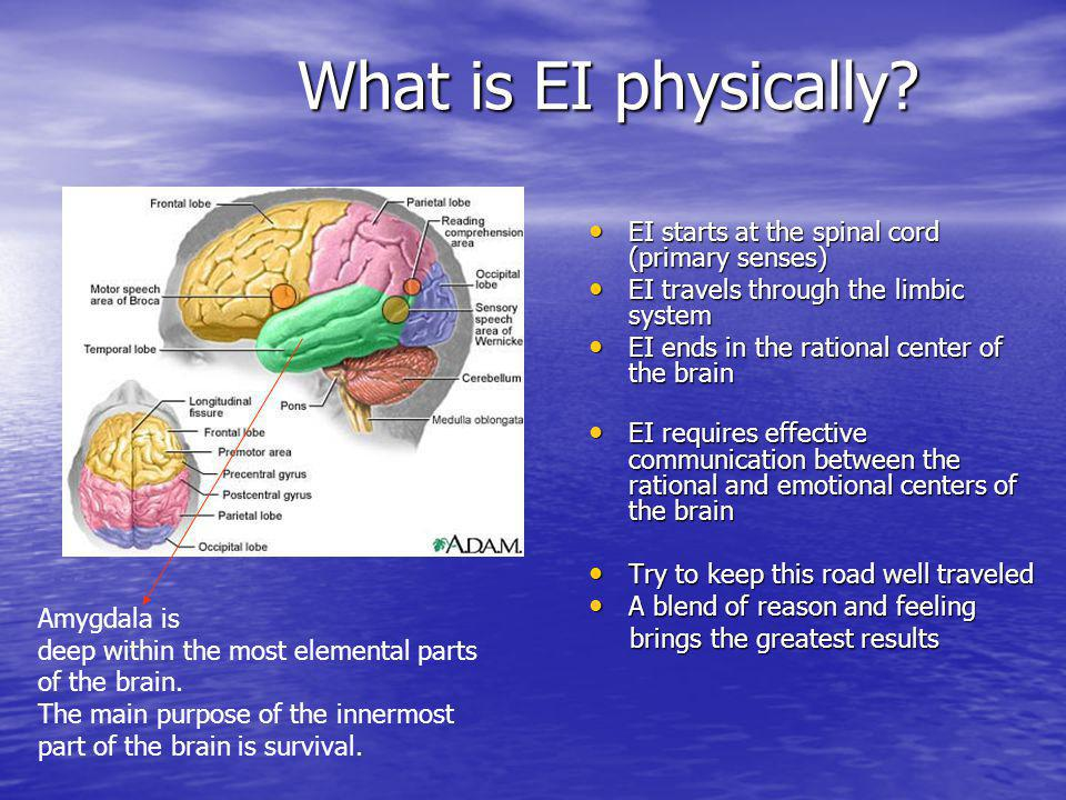 What is EI physically.What is EI physically.