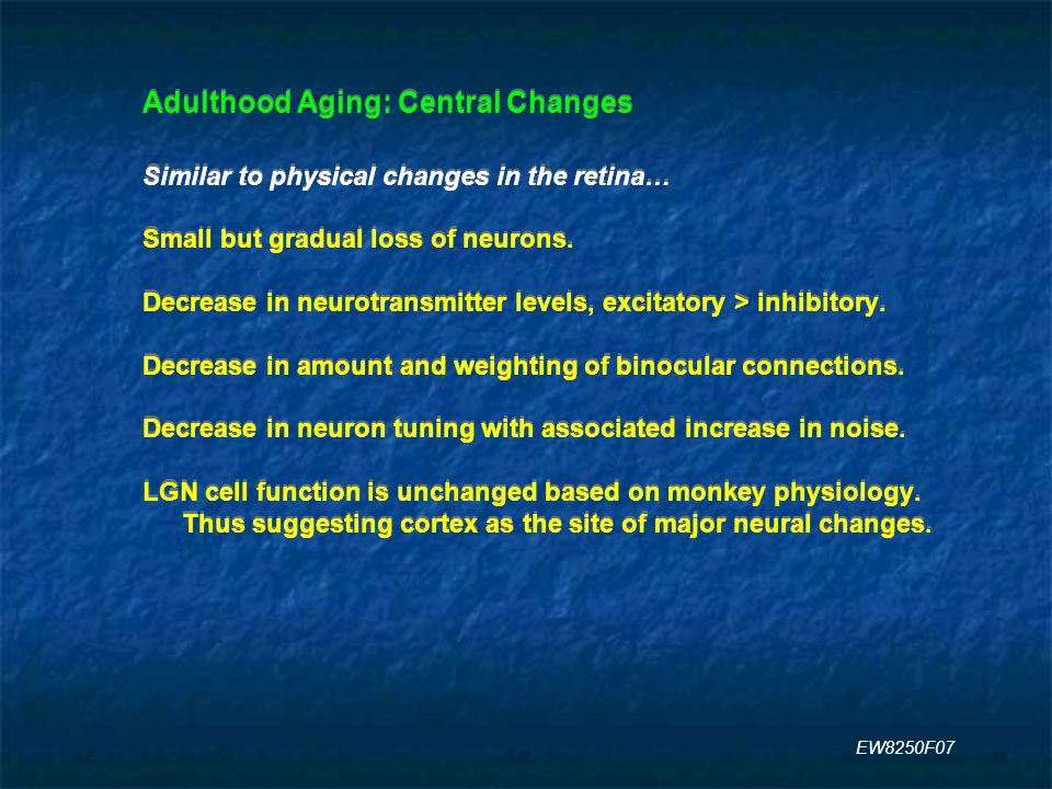 Adulthood Aging: Central Changes Similar to physical changes in the retina… Small but gradual loss of neurons.