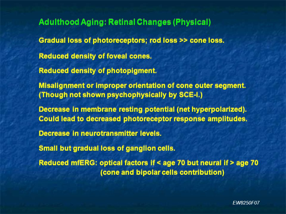 Adulthood Aging: Retinal Changes (Physical) Gradual loss of photoreceptors; rod loss >> cone loss.