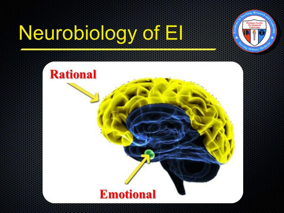 Neurobiology of EI Amygdala Rational Emotional
