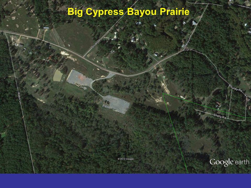 Big Cypress Bayou Prairie a