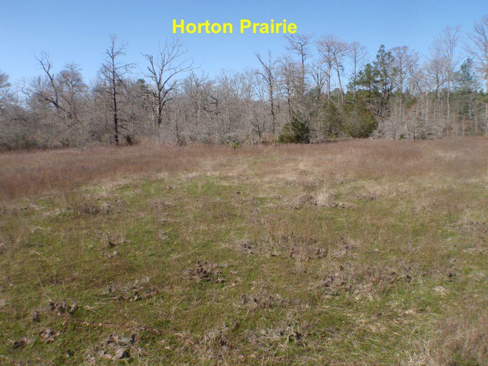 Horton Prairie