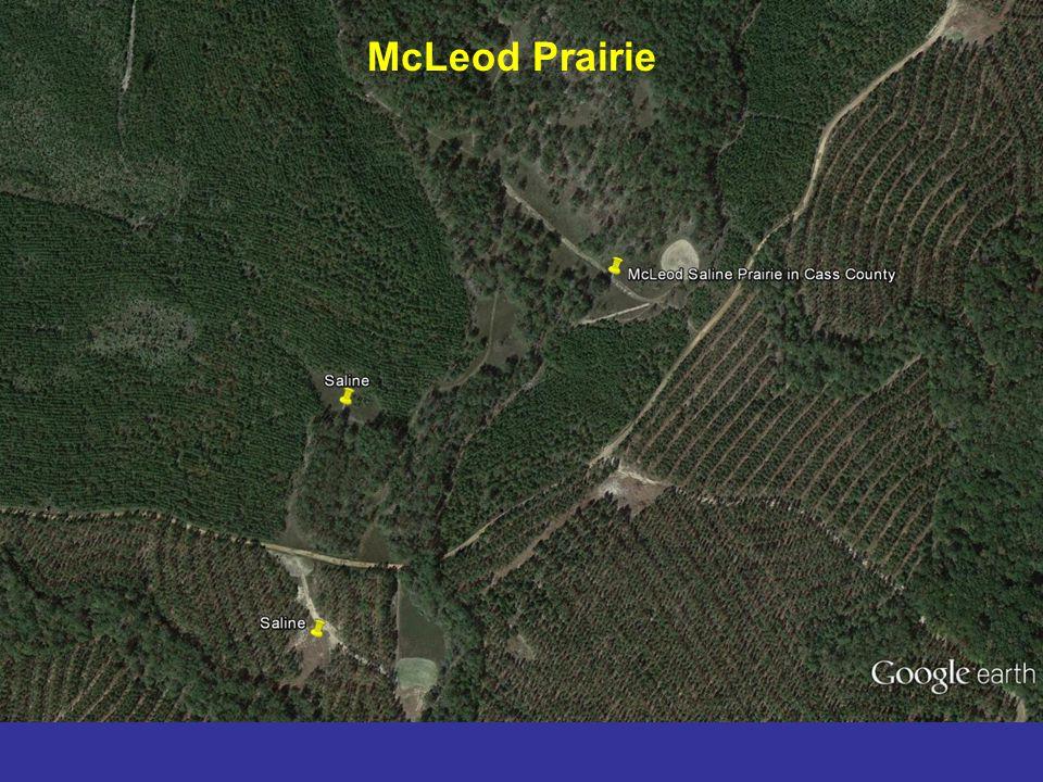 McLeod Prairie