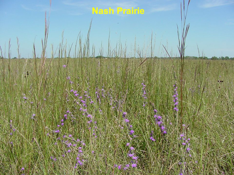 Nash Prairie