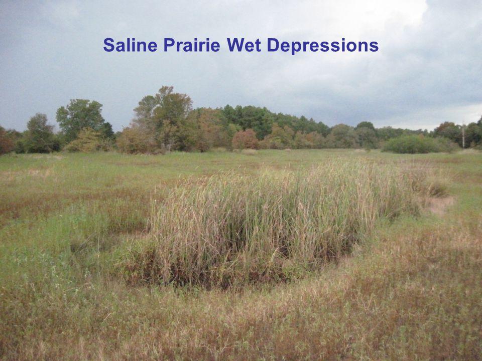 Saline Prairie Wet Depressions
