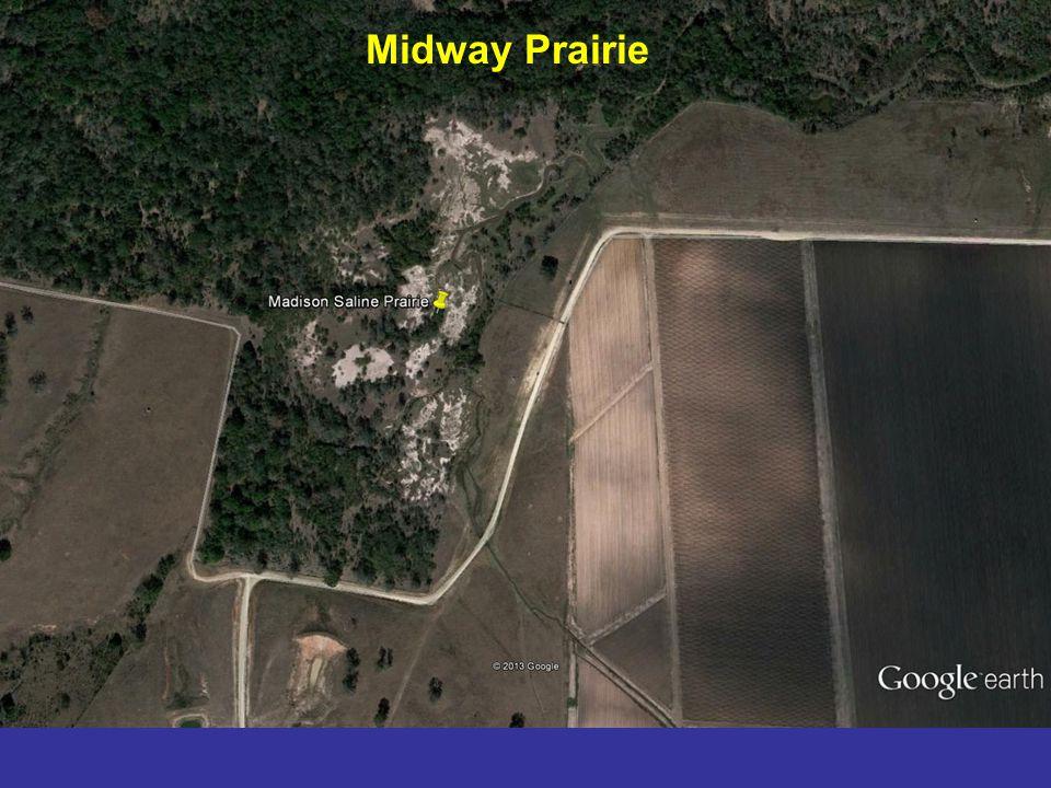 Midway Prairie