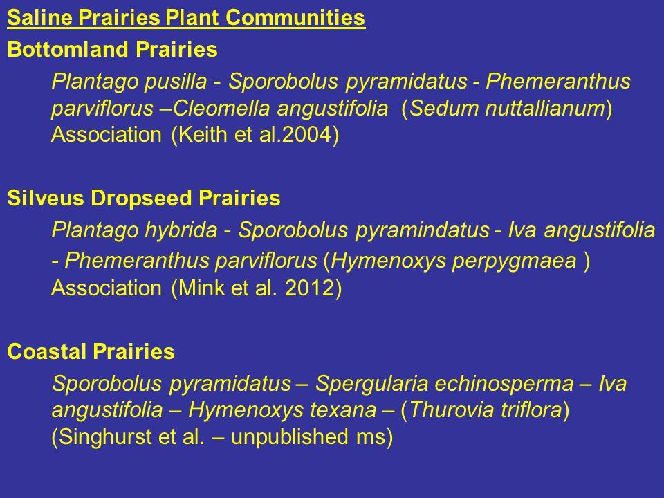Saline Prairies Plant Communities Bottomland Prairies Plantago pusilla - Sporobolus pyramidatus - Phemeranthus parviflorus –Cleomella angustifolia (Sedum nuttallianum) Association (Keith et al.2004) Silveus Dropseed Prairies Plantago hybrida - Sporobolus pyramindatus - Iva angustifolia - Phemeranthus parviflorus (Hymenoxys perpygmaea ) Association (Mink et al.
