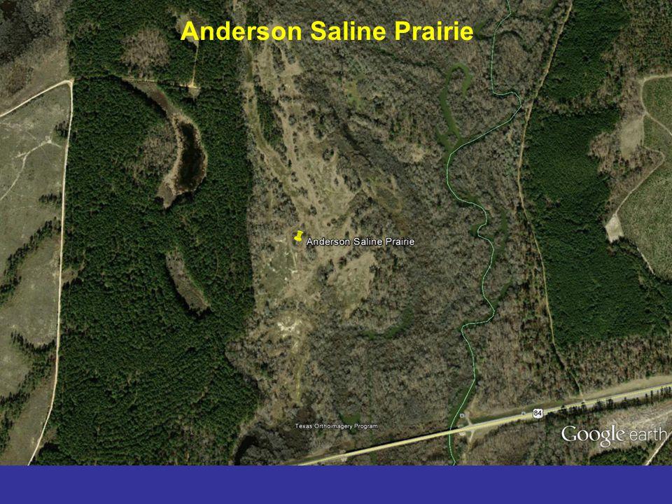 Anderson Saline Prairie
