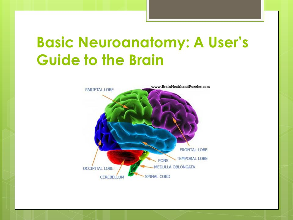 Basic Neuroanatomy: A User's Guide to the Brain