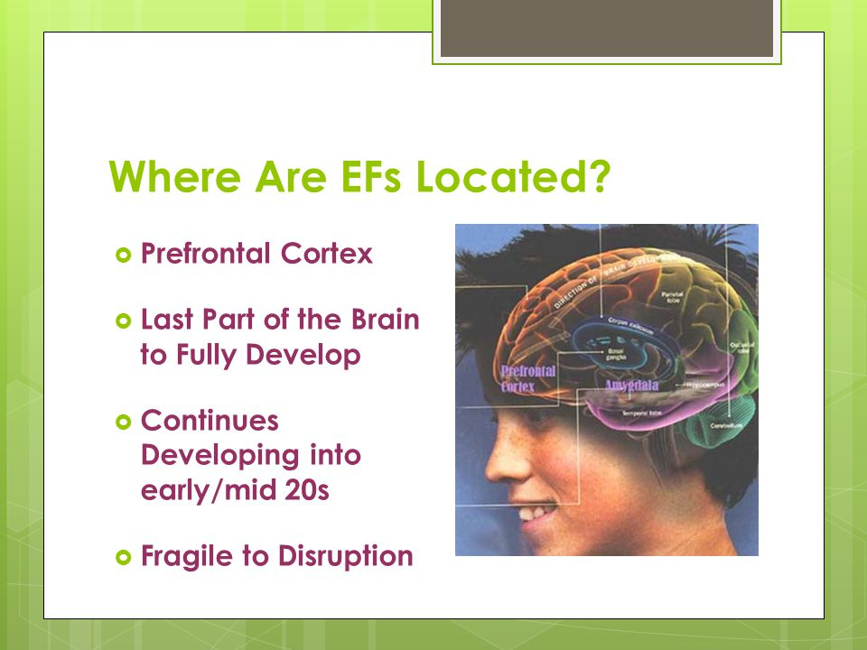 Where Are EFs Located?  Prefrontal Cortex  Last Part of the Brain to Fully Develop  Continues Developing into early/mid 20s  Fragile to Disruption
