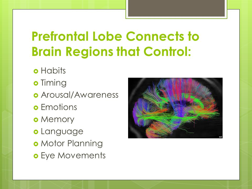 Prefrontal Lobe Connects to Brain Regions that Control:  Habits  Timing  Arousal/Awareness  Emotions  Memory  Language  Motor Planning  Eye Mo