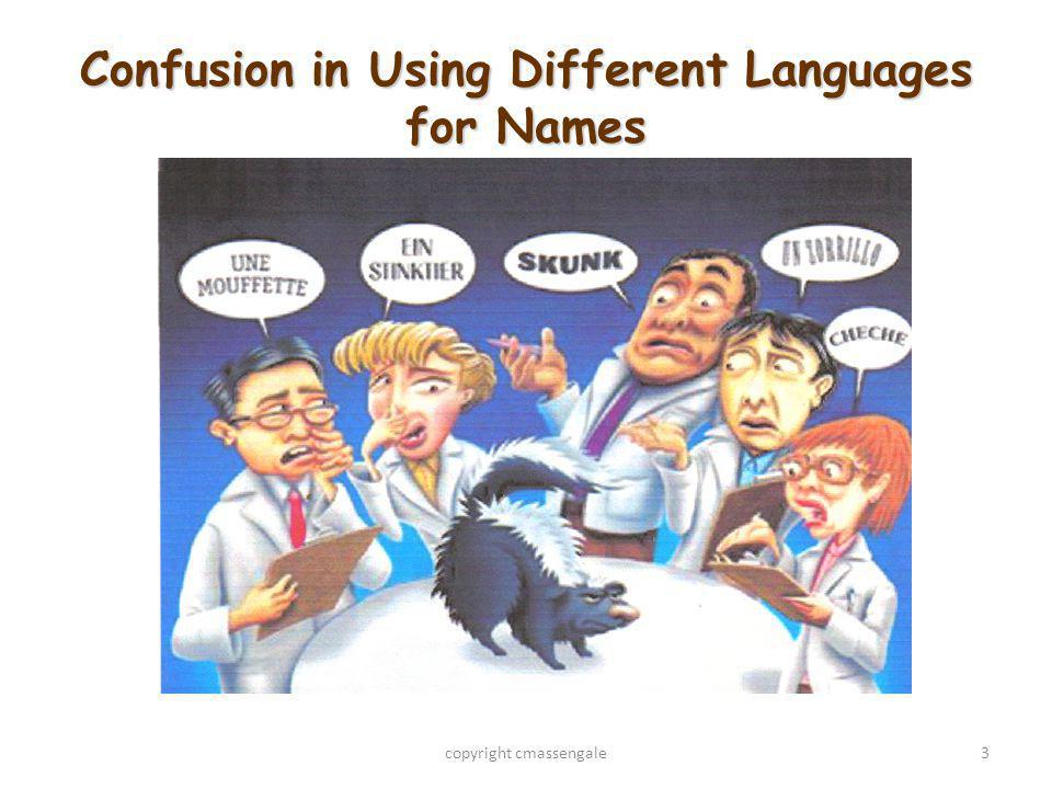 Confusion in Using Different Languages for Names copyright cmassengale3