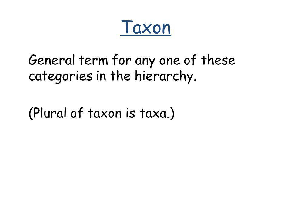 Taxon General term for any one of these categories in the hierarchy. (Plural of taxon is taxa.)