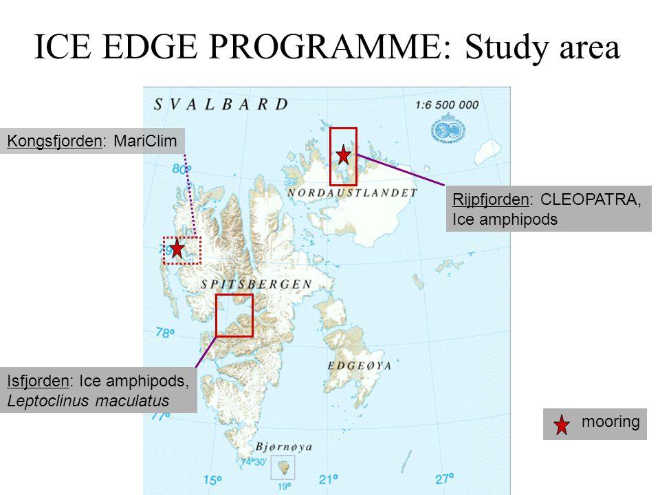ICE EDGE PROGRAMME: Study area Rijpfjorden: CLEOPATRA, Ice amphipods Isfjorden: Ice amphipods, Leptoclinus maculatus Kongsfjorden: MariClim mooring