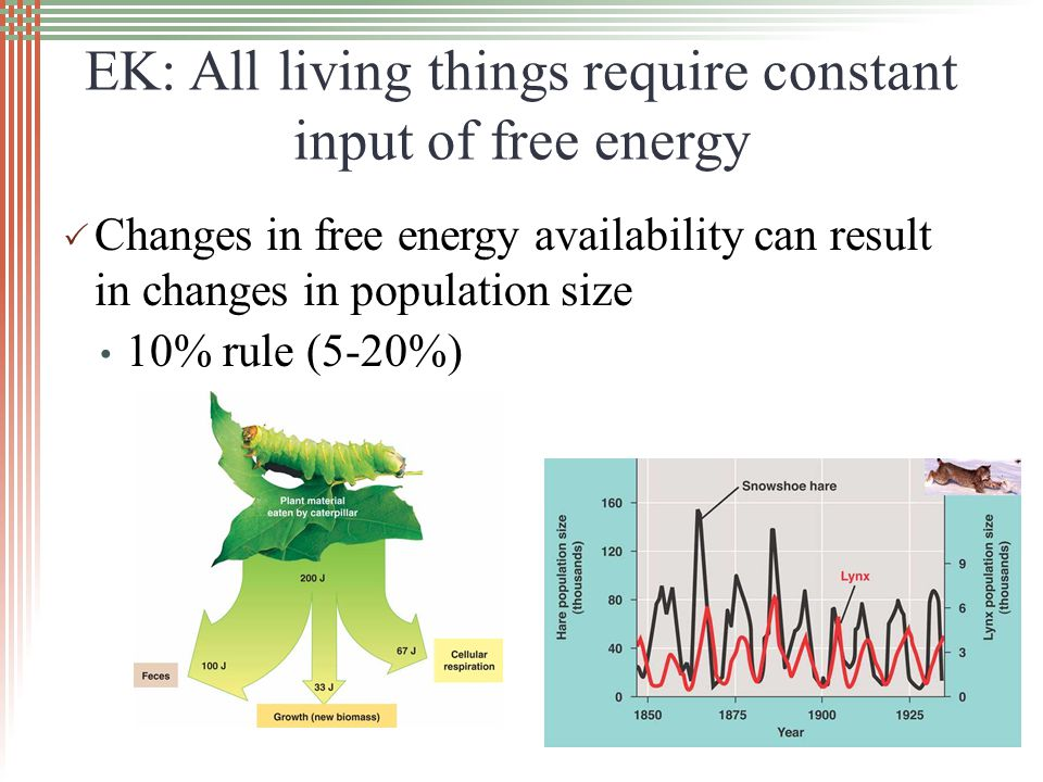EK: All living things require constant input of free energy  Changes in free energy availability can result in changes in population size 10% rule (5-20%)