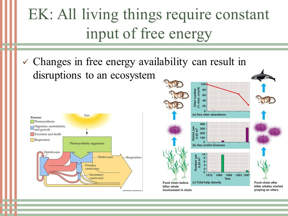 EK: All living things require constant input of free energy Changes in free energy availability can result in disruptions to an ecosystem