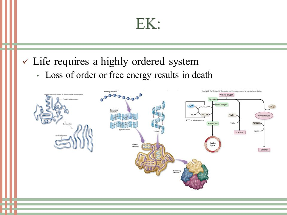 EK: All living things require constant input of free energy Living systems do not violate the second law of thermodynamics which stats that entropy increases over time Open system Coupled reactions