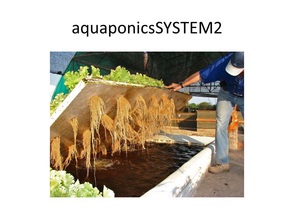 aquaponicsSYSTEM2
