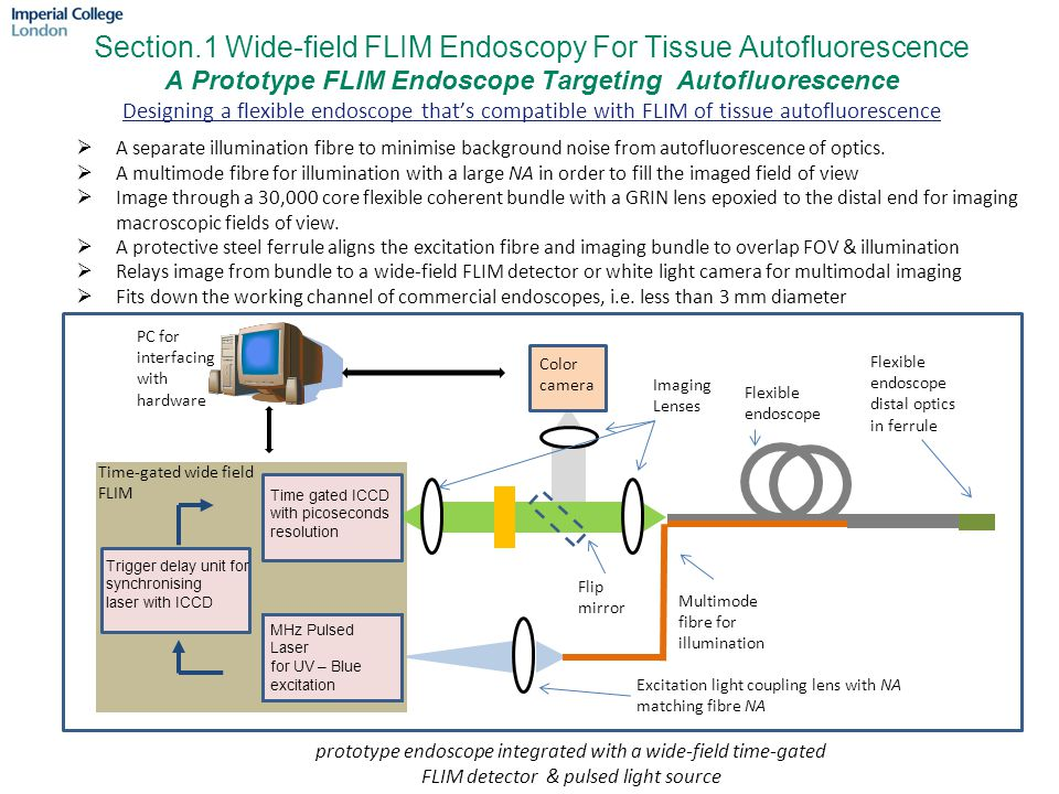 Section.1 Wide-field FLIM Endoscopy For Tissue Autofluorescence A Prototype FLIM Endoscope Targeting Autofluorescence Designing a flexible endoscope that's compatible with FLIM of tissue autofluorescence  A separate illumination fibre to minimise background noise from autofluorescence of optics.