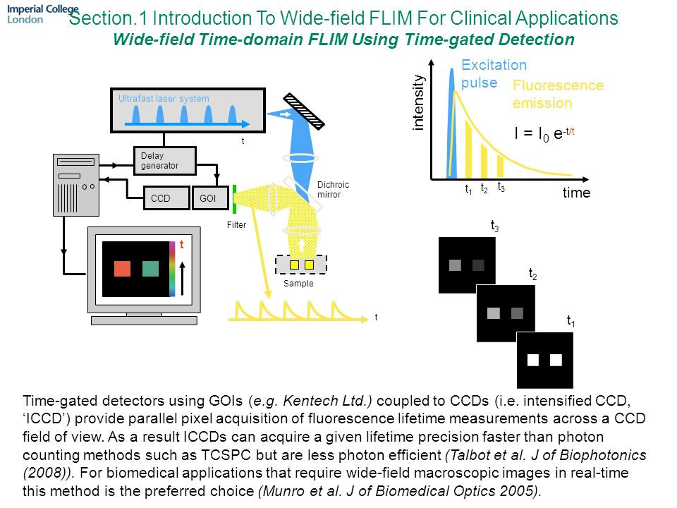 Section.1 Introduction To Wide-field FLIM For Clinical Applications Wide-field Time-domain FLIM Using Time-gated Detection t3t3 t3t3 t2t2 t2t2 I = I 0 e -t/t t1t1 t1t1 Excitation pulse time intensity Fluorescence emission Ultrafast laser system Sample Delay generator GOICCD Filter t t Dichroic mirror t Time-gated detectors using GOIs (e.g.