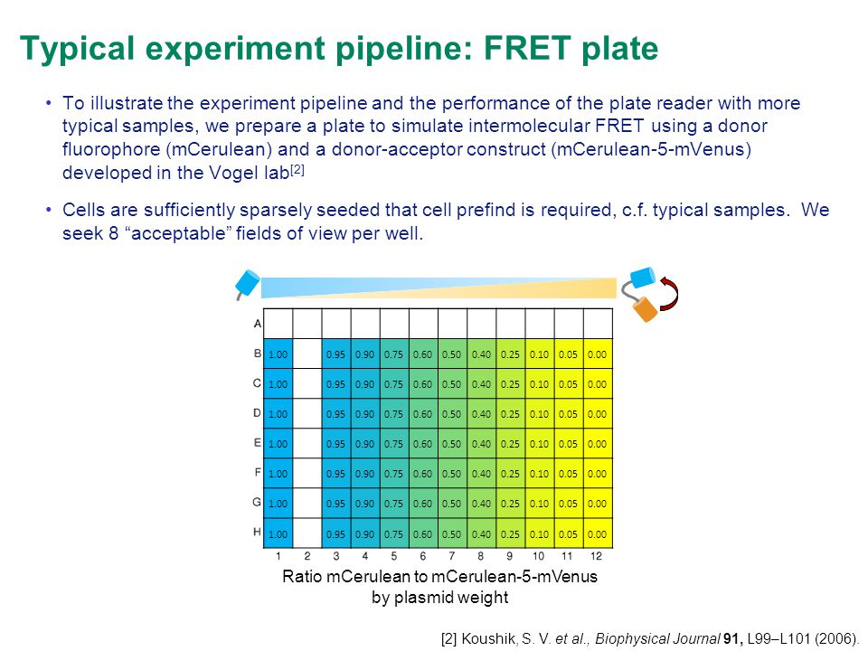 Typical experiment pipeline: FRET plate 1.000.950.900.750.600.500.400.250.100.050.00 1.000.950.900.750.600.500.400.250.100.050.00 1.000.950.900.750.60