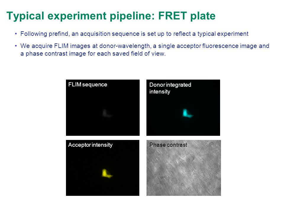 Typical experiment pipeline: FRET plate Following prefind, an acquisition sequence is set up to reflect a typical experiment We acquire FLIM images at